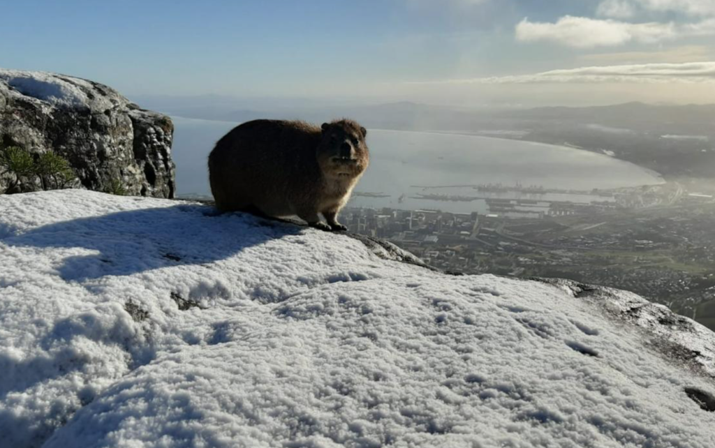 Visitors welcome to see snow on Table Mountain via cableway