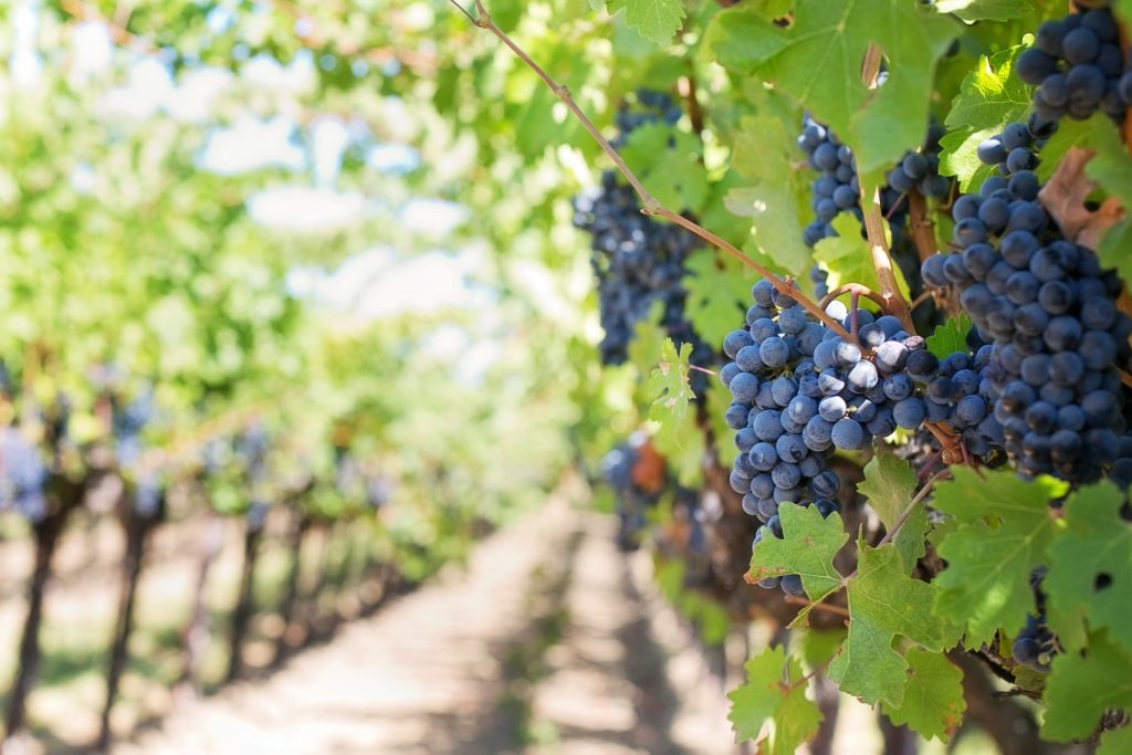Many wineries and wine grape producers face closure