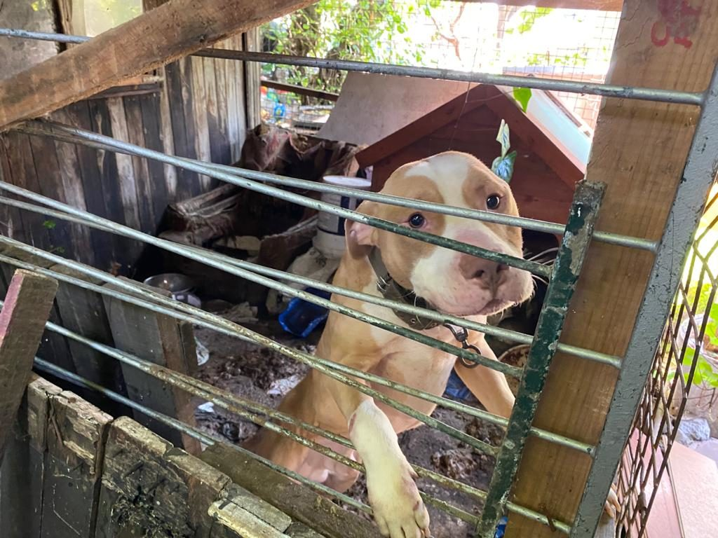 SPCA rescues five dogs from deplorable conditions