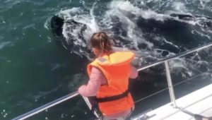 Spectacular close whale sighting off the coast of Hermanus