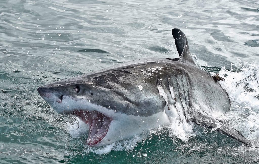 WIN: A Shark cage diving experience for two in Gansbaai (CLOSED)