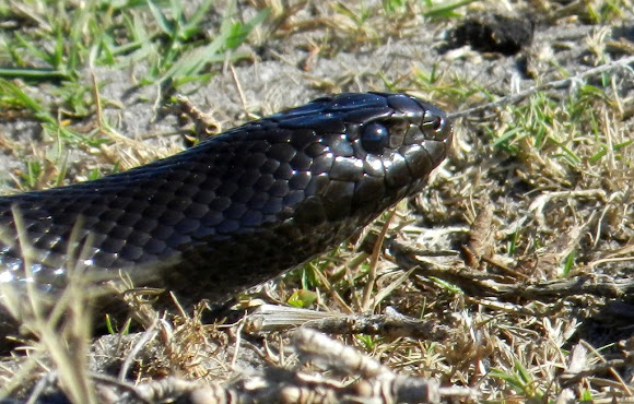 Nature-lovers warned of increased snake activity