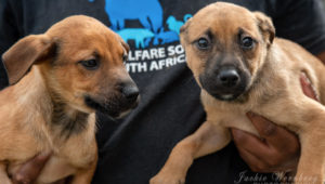 Animal Welfare Society encourages owners to microchip pets