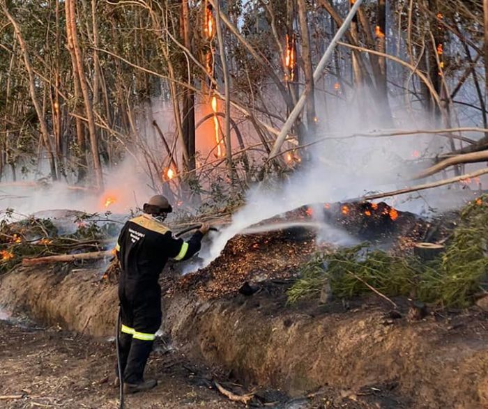 Forest fire fanned by strong winds spreads quickly on Wellington farm