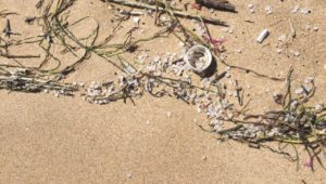 Influx of nurdles on Cape beaches may be result of container lost at sea