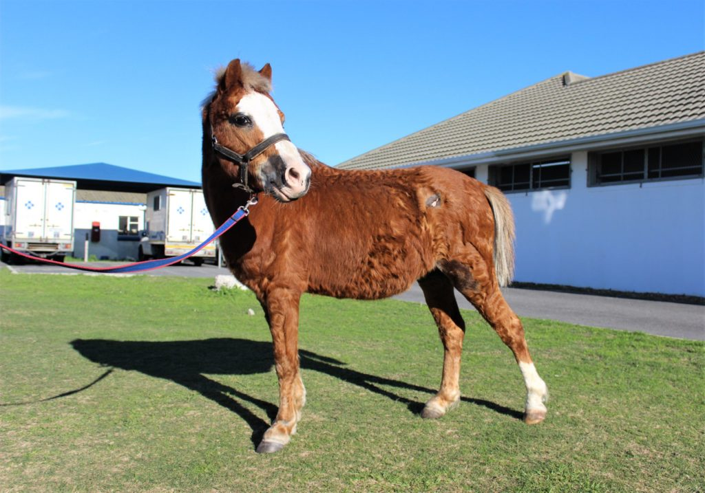 SPCA seeks forever home for farmyard animals