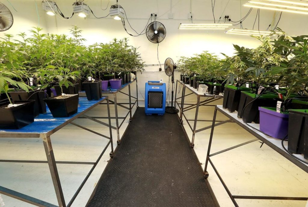 Police uncover R80k worth of cannabis in Ottery lab