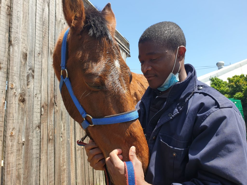 The SPCA is seeking a home for Star Master the horse