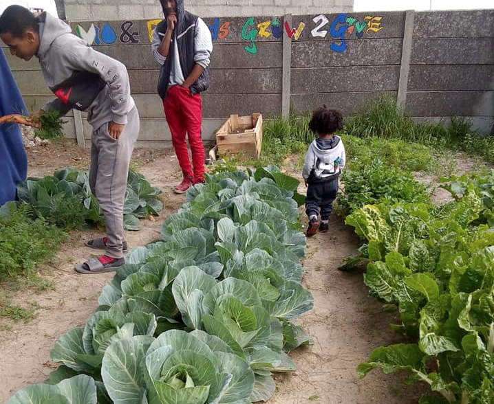 Bonteheuwel community plants its own food to fight hunger