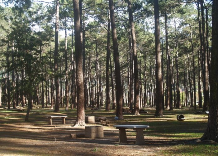 Tokai picnic site reopens to the public