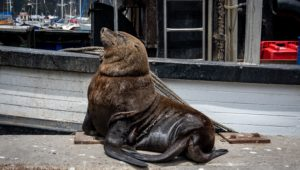 Public reminded to not feed seals this summer