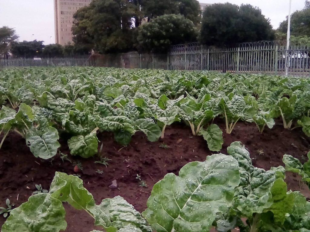 Homeless in Durban start garden, partner with supermarket to sell produce