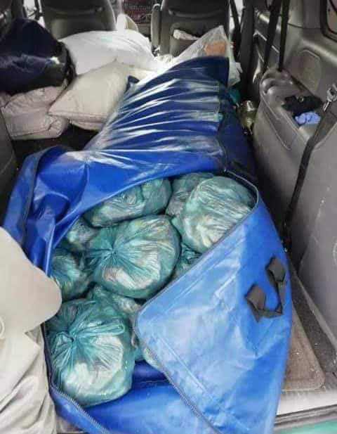 Lobster tails worth more than R500k found in the back of hearse