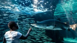 The Two Oceans Aquarium celebrates 25 years