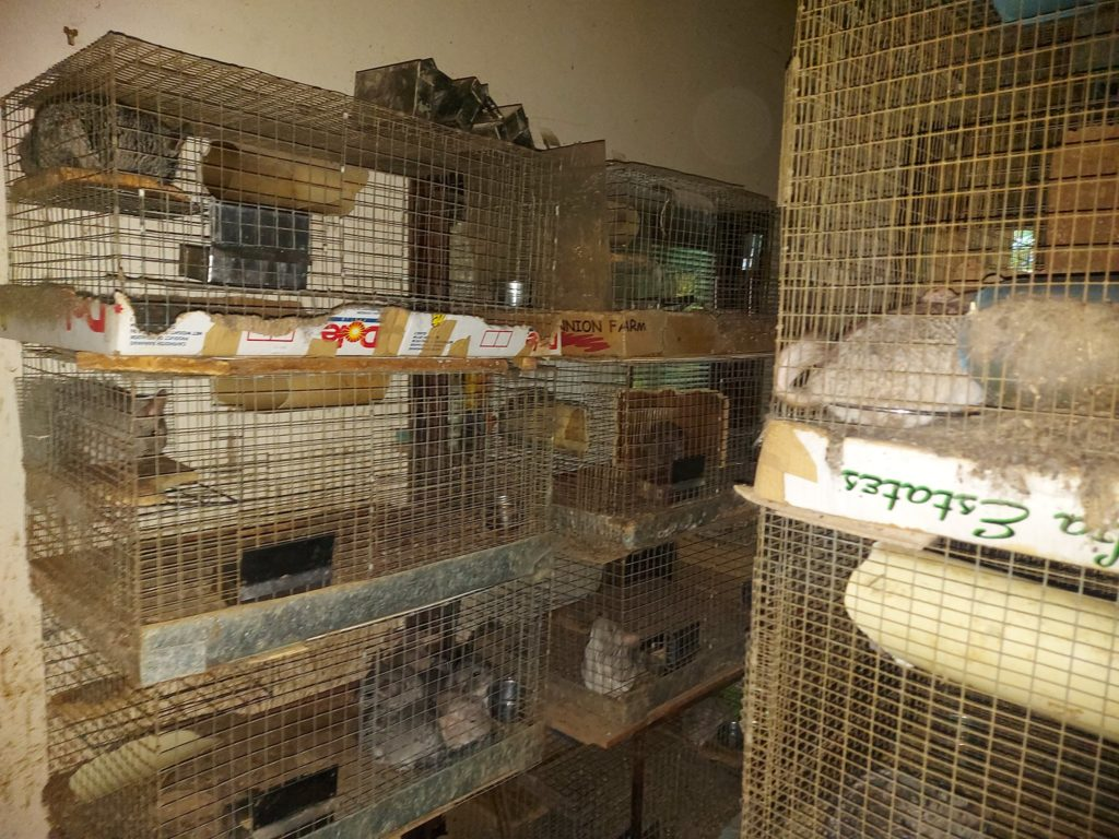 "SPCA seizes hundreds of exotic animals from ""house of horrors"""