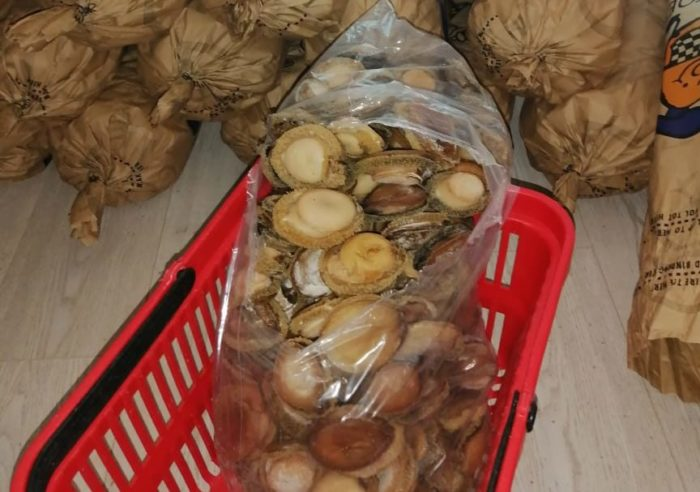 R1.9-million in abalone seized from Cape Town home