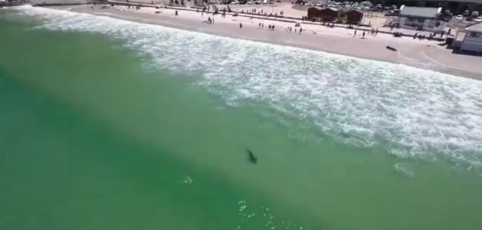 Bronze whaler shark spotted at Muizenberg beach