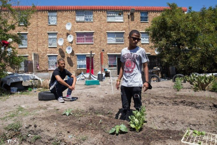 Elsies River youth start garden to feed their community