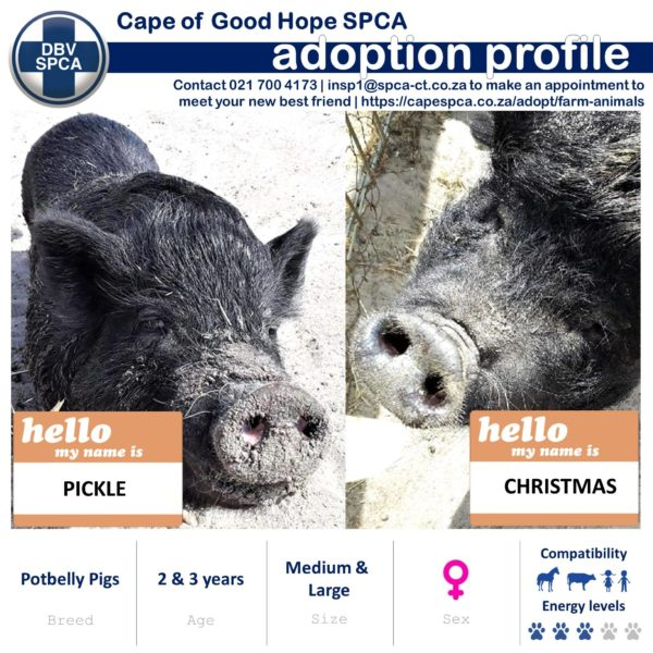 SPCA seeking a forever home for several of its farmyard animals