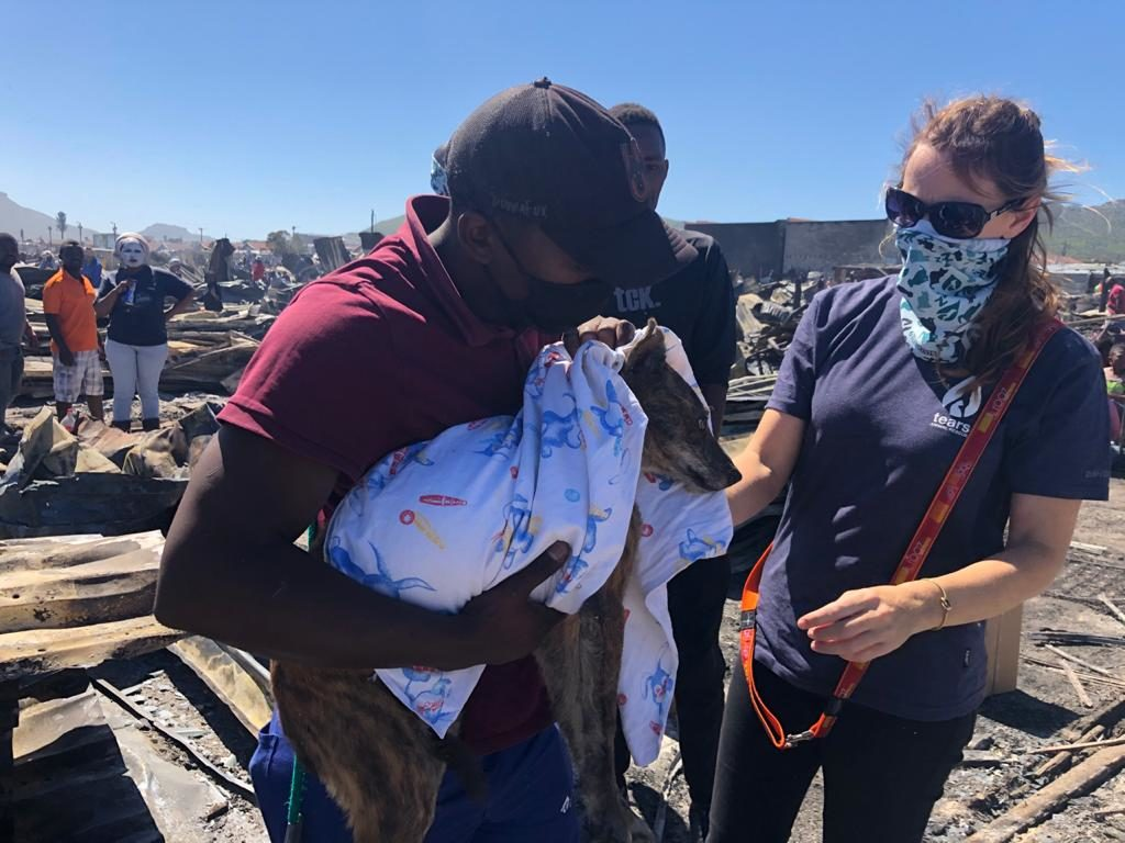 TEARS call for help to support animals after Masiphumelele fire