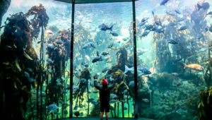 Holiday plans at the Two Oceans Aquarium – win a membership every day!