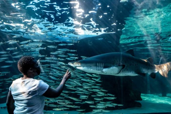 Two Oceans Aquarium Education Foundation offers Marine Sciences course to high schoolers