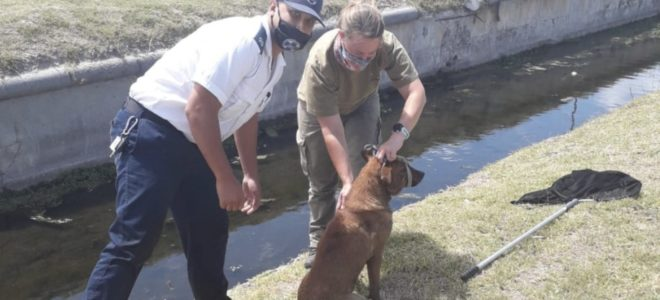 SPCA Cadet Inspector overwhelmed by public response to rescue video
