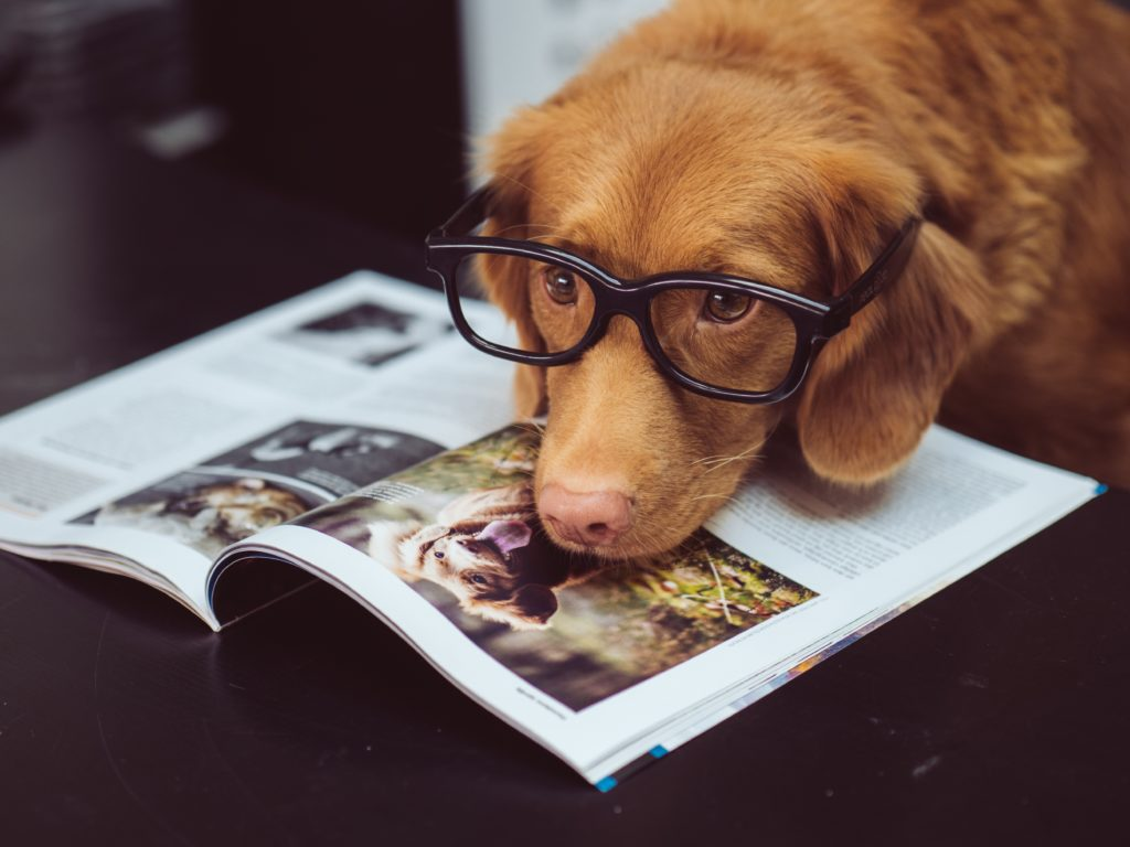 Dogs don't understand everything you are saying, study finds