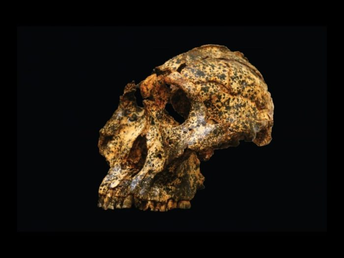 Fossil skull discovered in South Africa shines light on human evolution