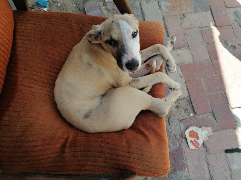 SPCA offers R5000 reward for missing dog