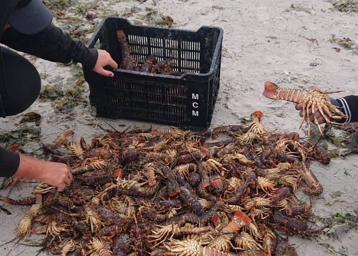 Public urged not to consume contaminated seafood as red tide continues to spread