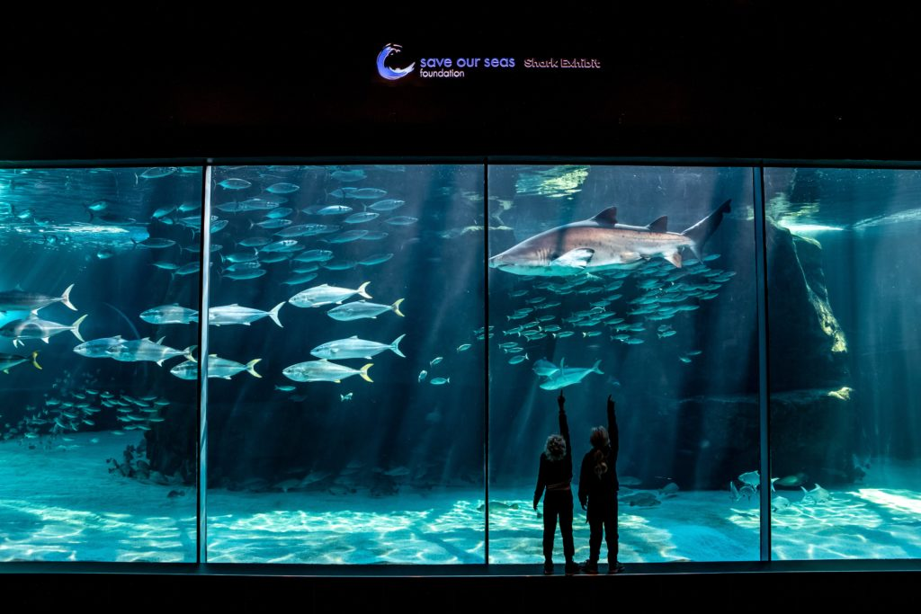 Two Oceans Aquarium offers discounted rates after 3pm