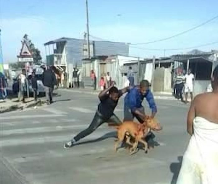 Two men face charges for publicly stabbing dog to death in Khayelitsha