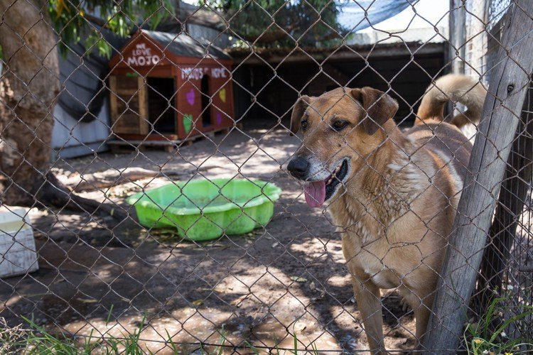 Adopt a Pet shelter in Philippi to close after 17 years