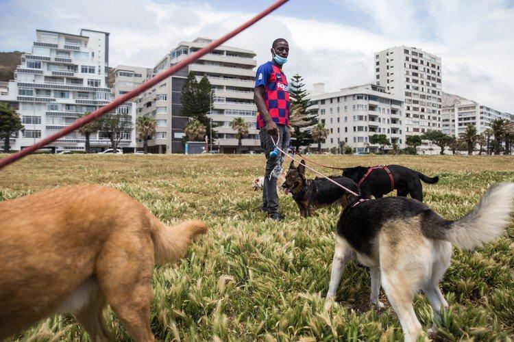 "Dog walker ""finds joy"" with furry pets amid lockdown blues"