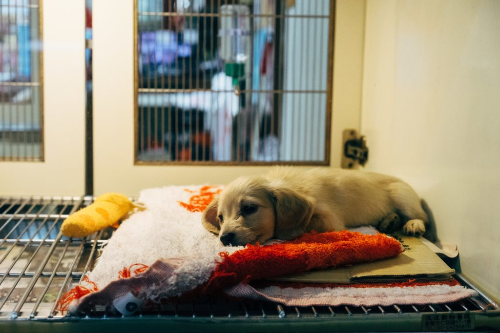 Pet abandonment skyrockets after festive season