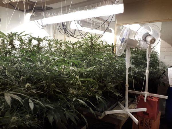 Noordhoek hydroponic marijuana lab busted