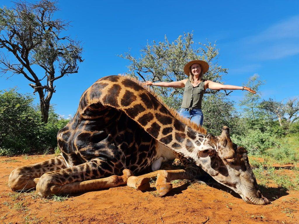 South African trophy hunter proudly poses with giraffe heart