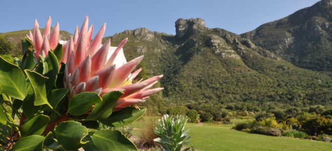 Kirstenbosch to introduce dual pricing from April