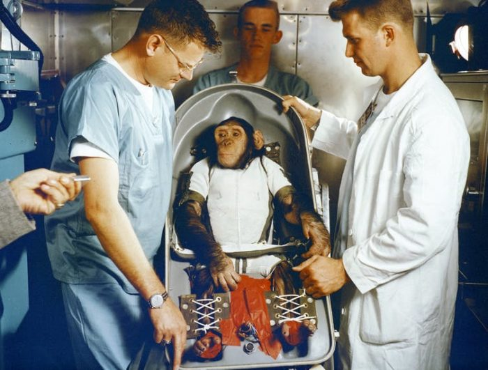 Apes, robots and men: The life and death of the first space chimp