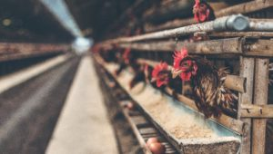 Russia records first H5N8 bird flu strain in humans