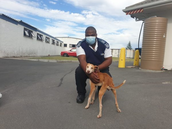 Anonymous tip-off leads SPCA to the rescue of chained, starving dogs