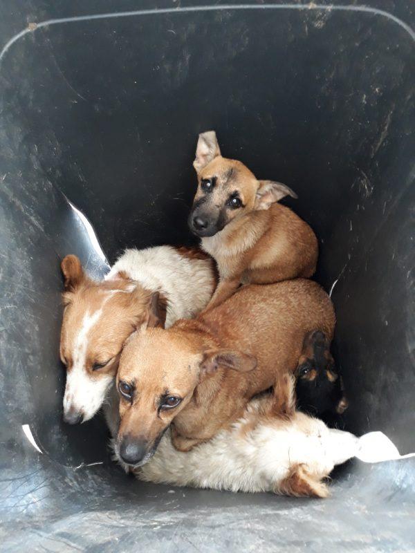 Dogs in bin