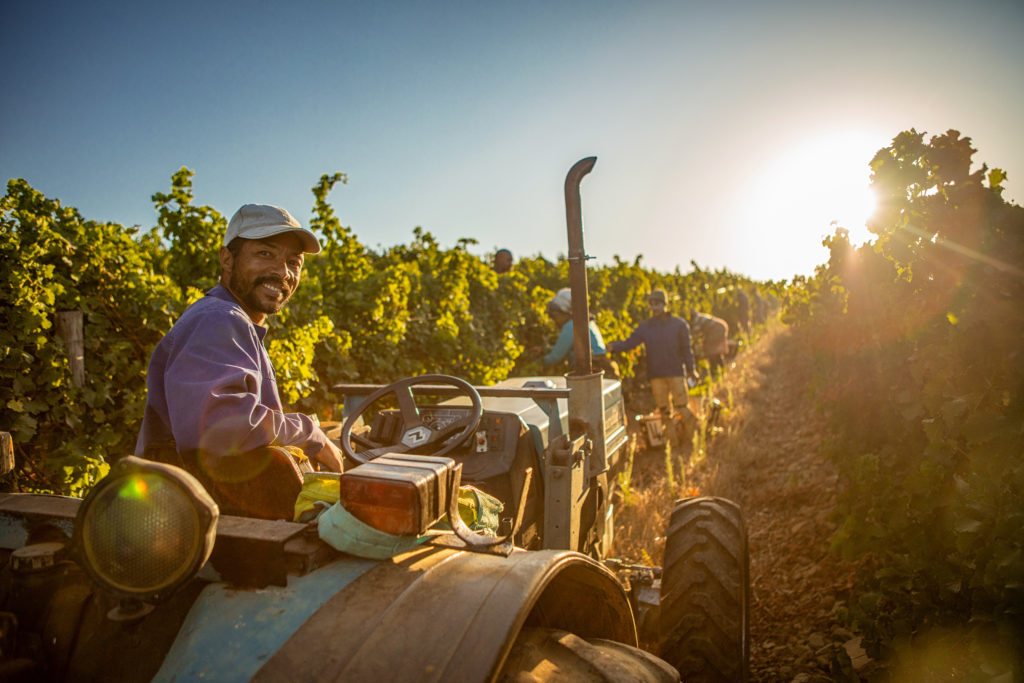 Celebrate the grape with personalised harvest tours!