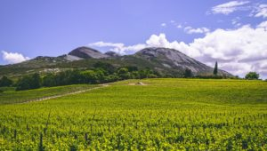 WIN: A Paarl Wine Route 'Wine Passport for Two' worth R3000