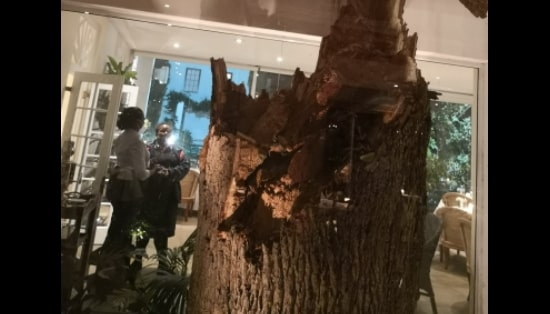 Tree blown over by storm during Helen Zille's birthday celebration