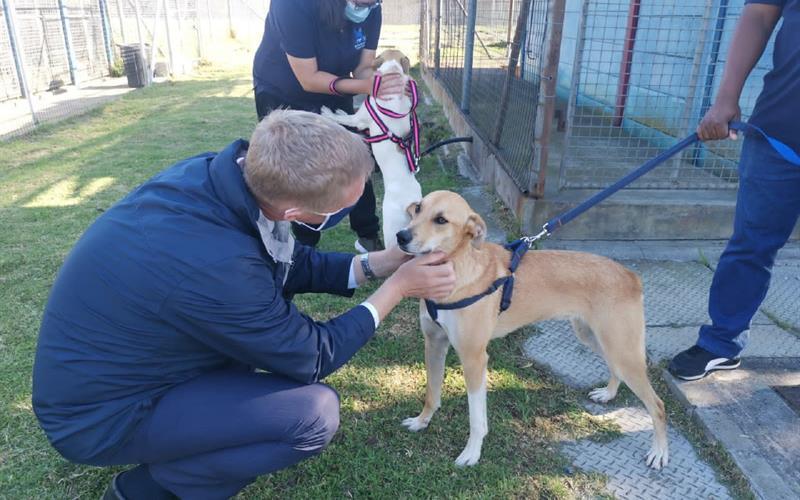 City supports animal adoption