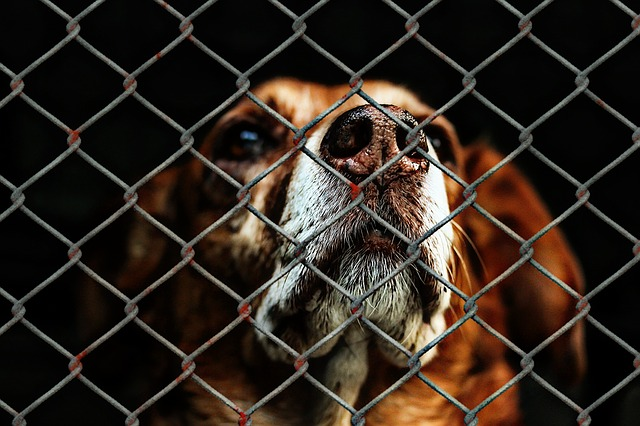 The state of Cape Town's pet population has never been this grim and the need for your help has never been this urgent.Since the start of the New Year the number of unwanted animals admitted into care has skyrocketed by 200% and as more and more pet owners suffer financial ruin the number is very likely to increase.