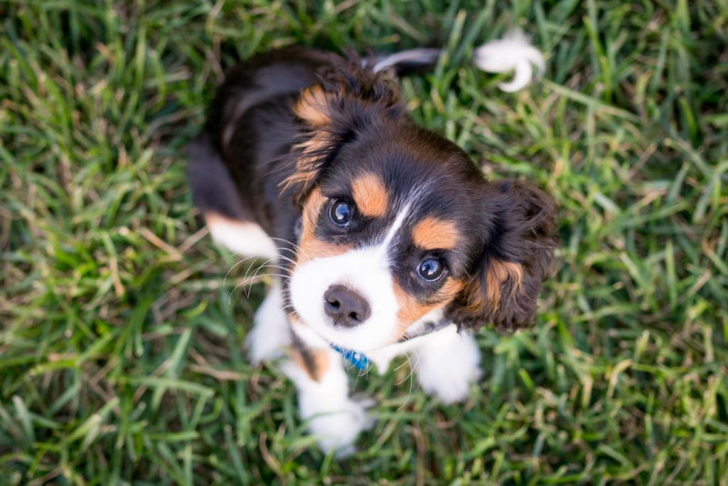 3 ways to protect your pooch from parvo