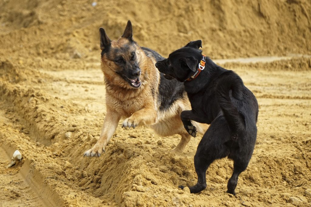 City of Cape Town to target dogfighting rings with newly formed team